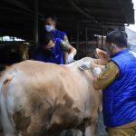 Prosedur Potong Hewan Kurban di Tengah Pandemi